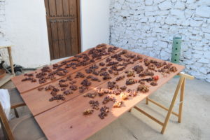 We are experimenting with sun drying our grapes. We have eaten loads